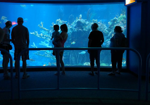 Dive in Epcot's aquarium while your family watches from the observation deck!