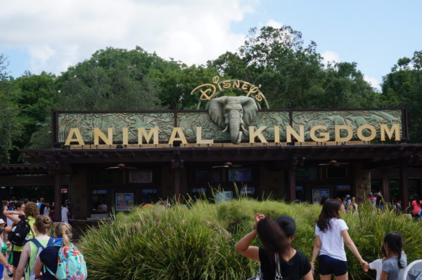 Disney's Animal Kingdom is celebrating 20 years!