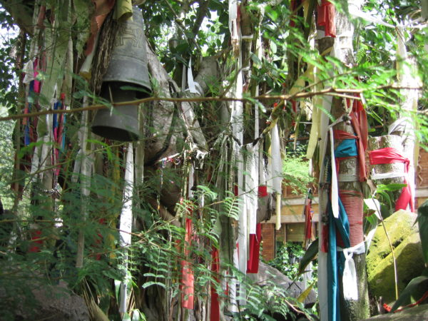 It's a common practice to hang bells and scarves from trees in Asia to commemorate loved ones who have passed.