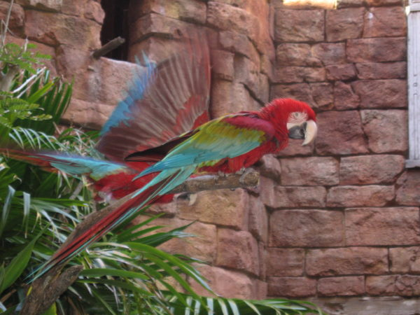 There are some great bird shows in Disney's Animal Kingdom!