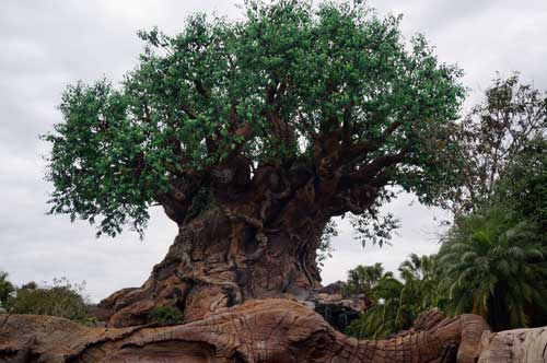 The Tree of Life looks good these days.