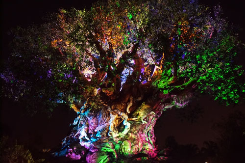 Check out the Tree of Life at night.