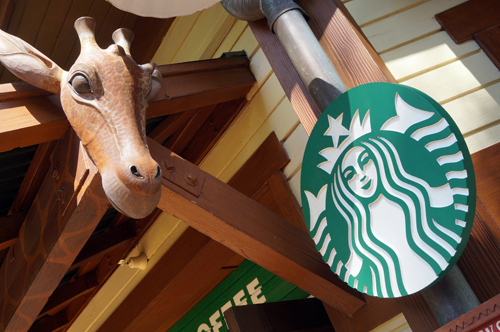 I think that giraffe wants a Starbucks!