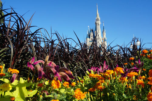 Disney changes plants depending on the season.