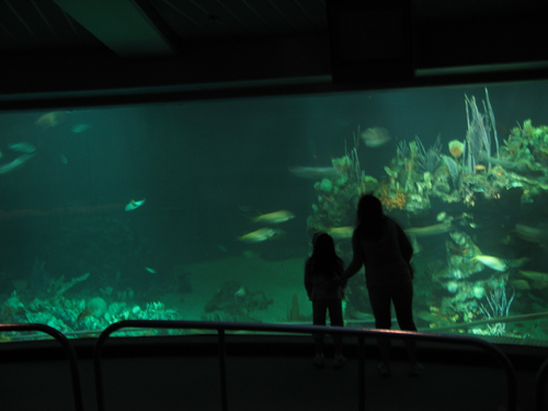 There are many fish in The Seas, and kids love to watch and learn all about them.