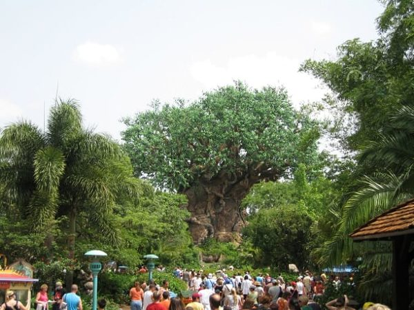 Disney's Tree of Life greets all guests and stands at 145 feet in height!
