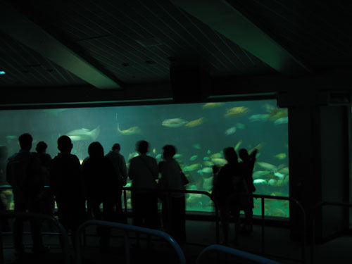 Check out the sea life in one of the world's largest aquariums.