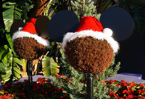 Even the plain old bushes are decked out for Christmas.