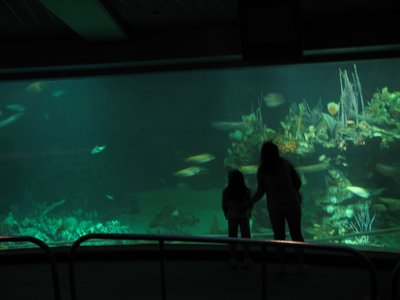 Huge windows into the aquarium provide great viewing of sea life.