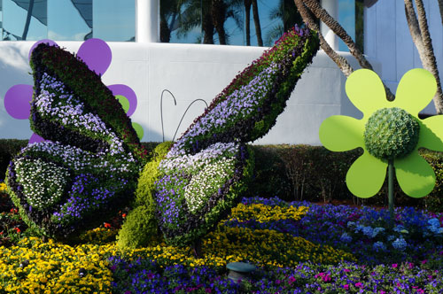 This butterfly topiary is not far from Spaceship Earth in Future World.