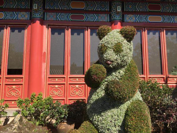 Look how cute this panda bear is in China!