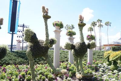 Fantasia ostriches.