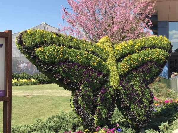 This beautiful butterfly topiary stands outside the Butterfly Garden.