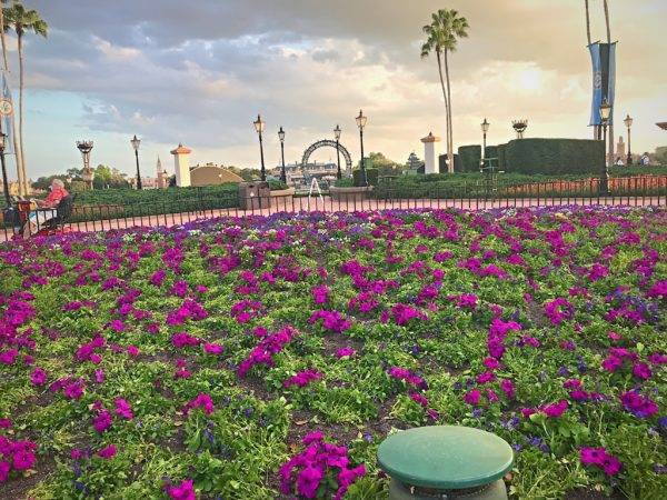 These flowers near the entry to World Showcase show off the new central Harmonious barge.