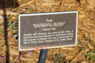 "Here you will find the ""Barbara Bush""!"