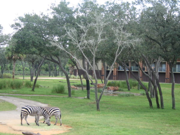 You won't mind being a little removed from the parks when you look out your window and see zebras wandering around!