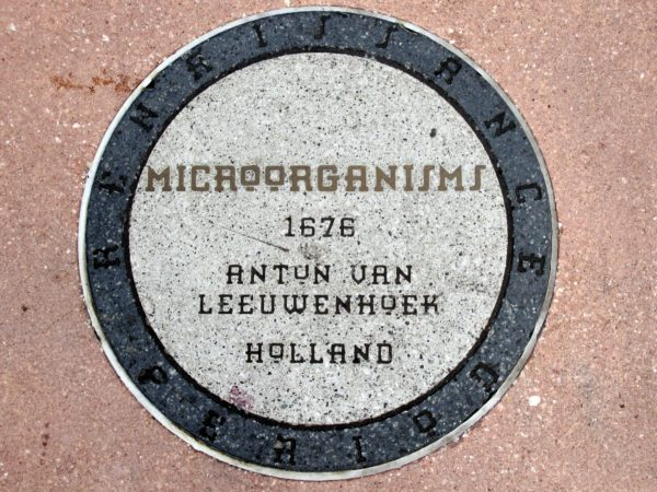 Antun Van Leeuwenhoek, from Holland, discovered microorganisms in 1676 and effectively started microbiology. Microorganisms serve many functions including to ferment food, treat sewage, produce fuel, and even as weapons of biological warfare and terrorism. They are also responsible for infectious diseases, and studying them helps keep us healthy.