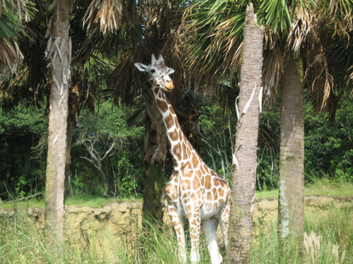 The animals you will see in the safari are amazing.