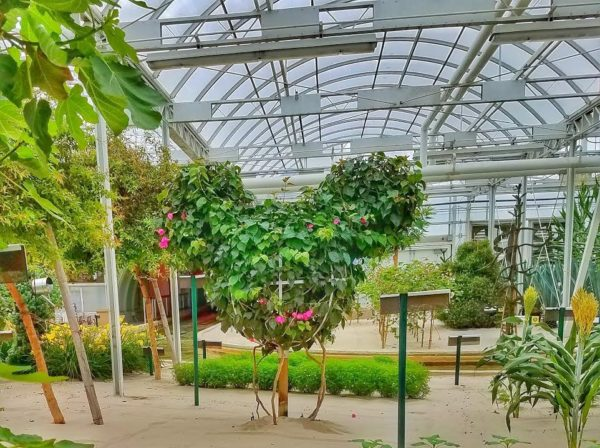 Did you know there are 30 Hidden Mickeys in the greenhouses?
