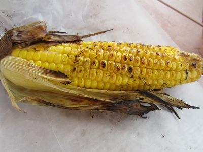 The corn is roasted on a grill and is very good.