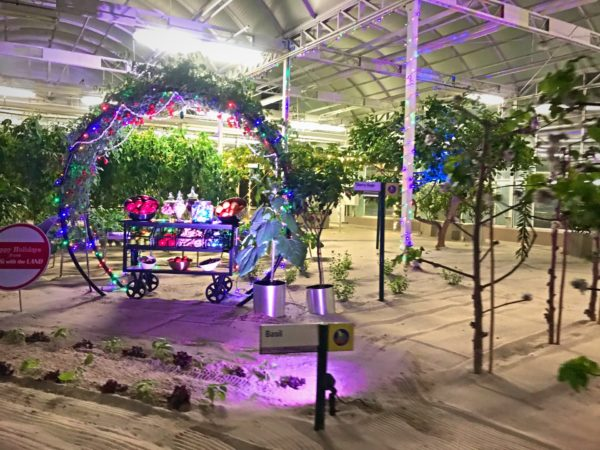 Check out this beautiful holiday display in the greenhouse.