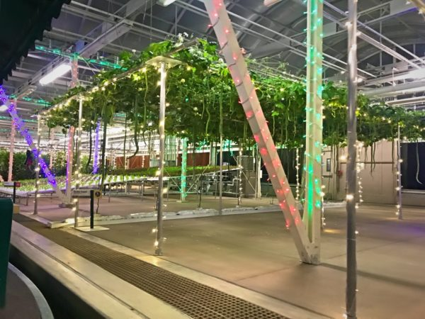 Love the colorful lights in the greenhouses!