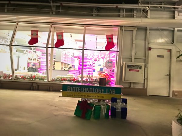 Stockings hung with care at the Biotechnology Lab.