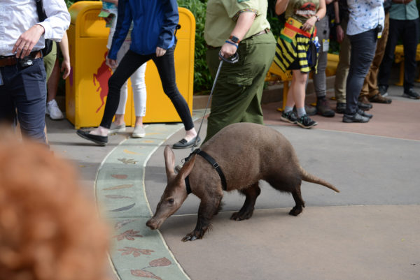 Willie the aardvark goes for a stroll. Photo credits (C) Disney Enterprises, Inc. All Rights Reserved