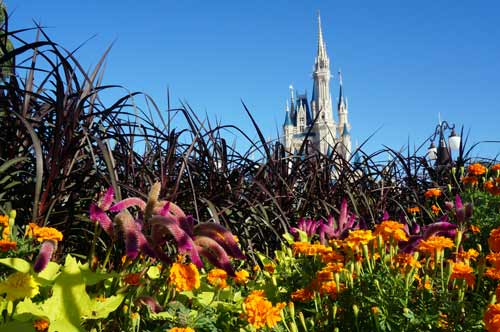 Amazing blooms all around the hub near Cinderella Castle.