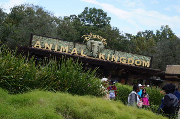 Disney's Animal Kingdom will be getting a new entrance, but there aren't any details yet!
