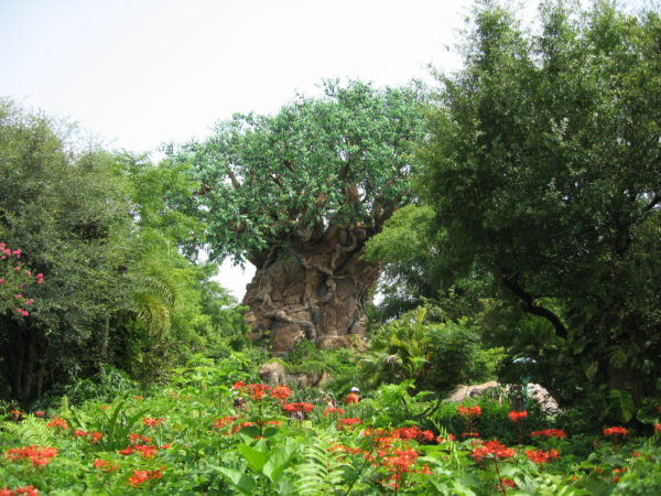 Animal Kingdom features lots of vegetation.