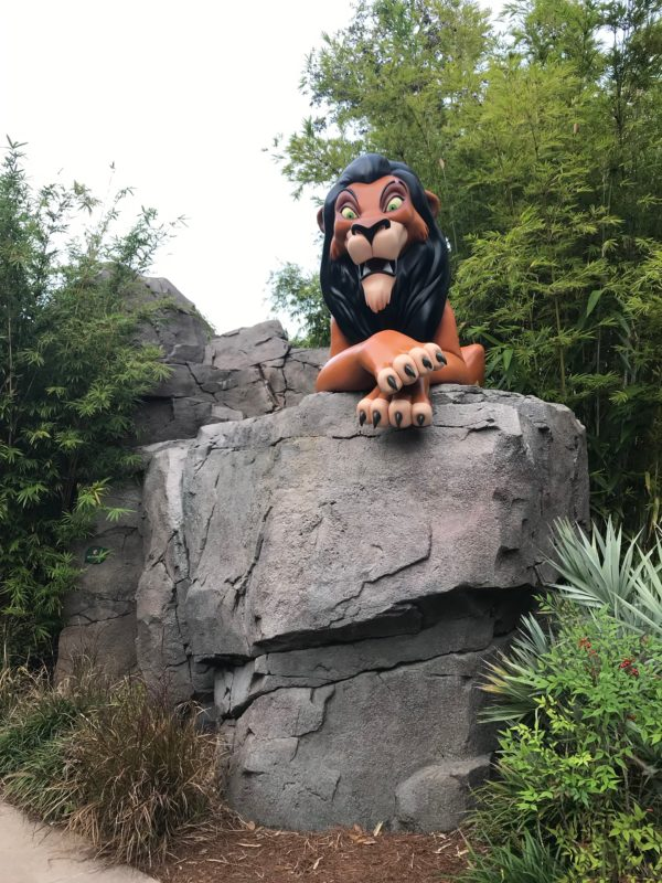 Scar keeps a close eye on visitors.