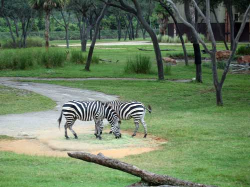 Here is your chance to see African animals up close and personal.