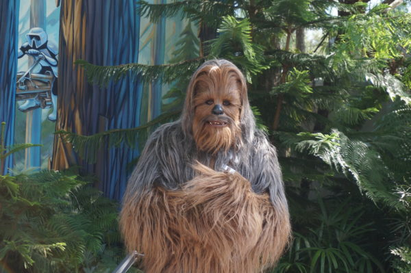 Meet Chewbacca at Star Wars Launch Bay!