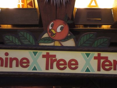 Orange Bird has returned to the Sunshine Tree Terrace.