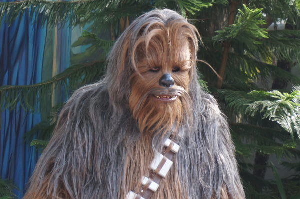 Everyone's favorite wookie, Chewbacca. Photo credits (C) Disney Enterprises, Inc. All Rights Reserved