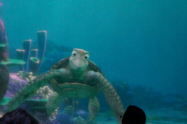 Turtle Talk with Crush is back. Totally awesome!