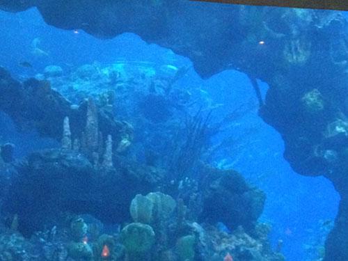 This is one big aquarium.