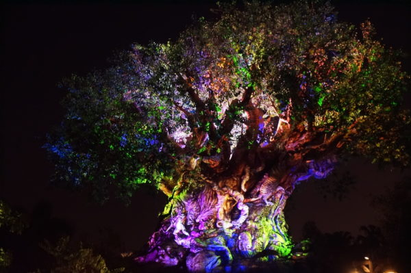 Tree of Life becomes quite beautiful at night!